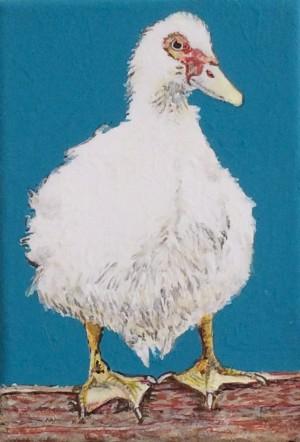 Quacka